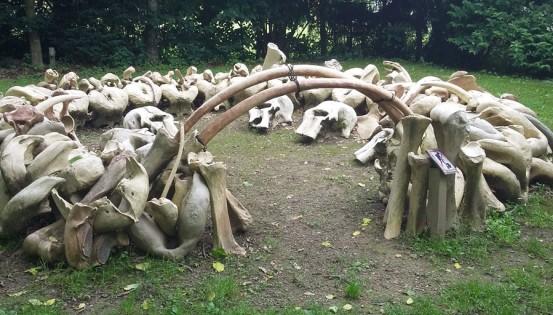 © C. Daloze Reproduction d'une habitation en ossements de mammouths, telle que découverte en Ukraine. Ce type d'habitat date de 16.000 ans environ.