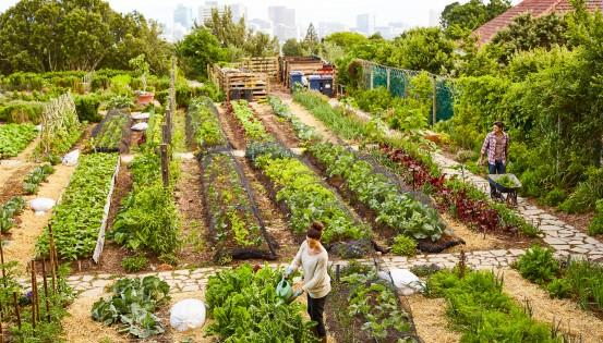 De l'agriculture locale pour mieux nourrir la population. @istock