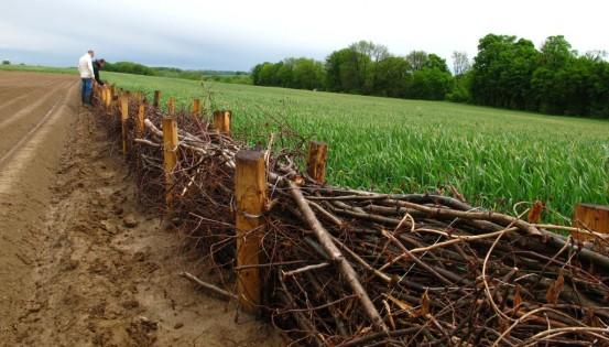 Une fascine installée le long d'un champs en Wallonie. (c) Cellule GISER
